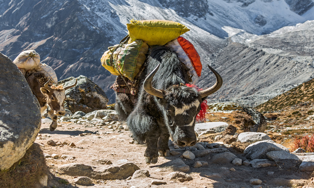 Local Nepalese way of life