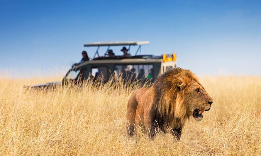 Game Safari South Africa