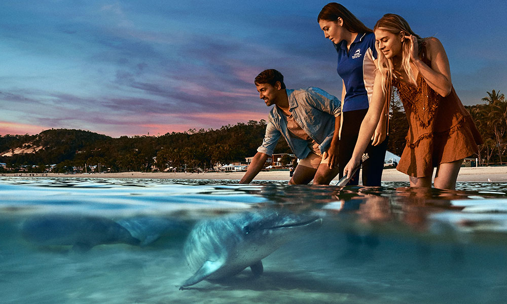 Wild dolphin feeding. Credit: Tangalooma Island Resort